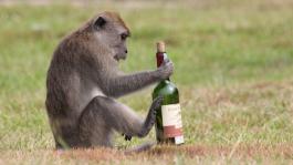 Стиль пьяного бабуина: Блог Топрега (+фриролл)