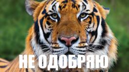 Регуляра TigerGaming забанили из-за установленного SimplePostFlop и конфисковали $26000